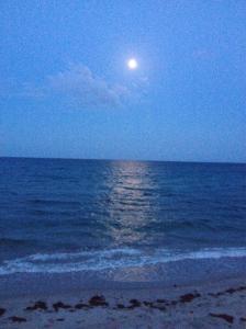 Moonlight Madness