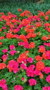 Mom's Favorite Flowers!