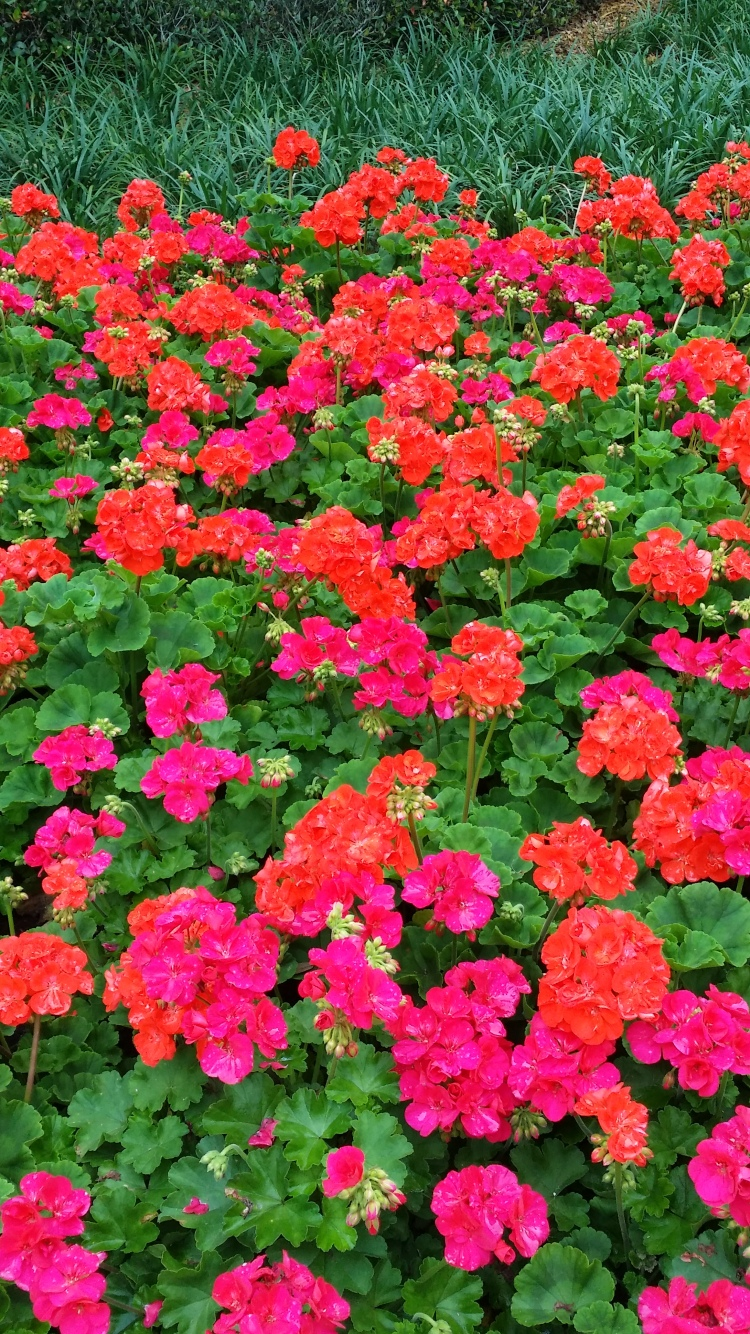 The-Momma's-Favorite-Flowers