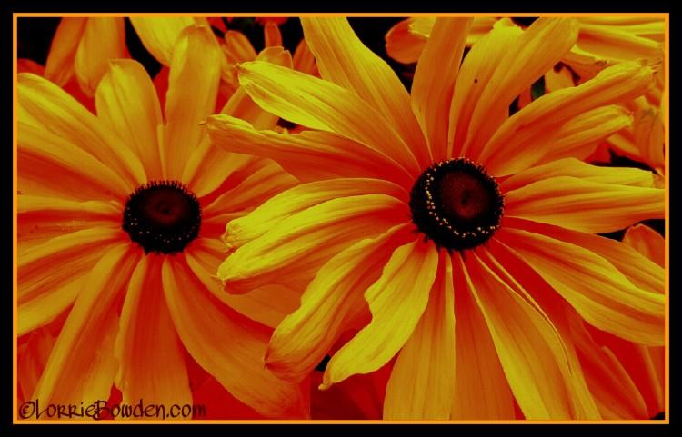 PicsArt_08-28-01.09.38