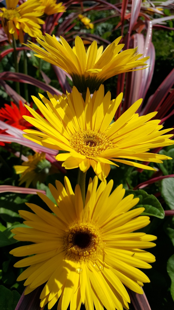 layers of yellow flowers