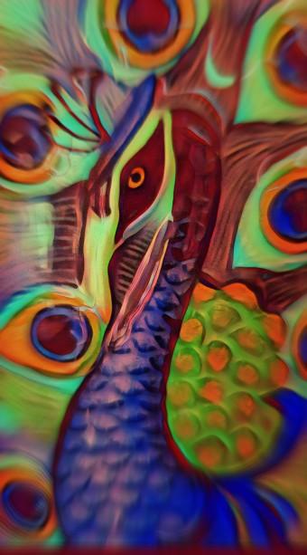 PicsArt_07-22-12.36.43Peacock