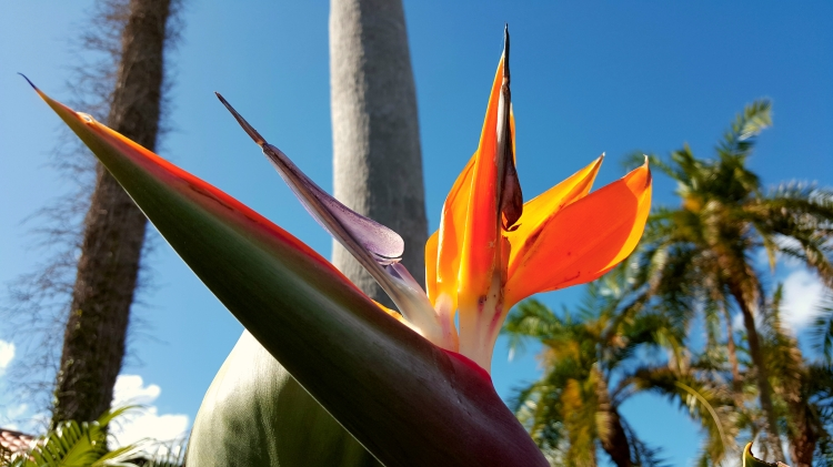 Bird-of-Paradise-Bright-Blue-Sky
