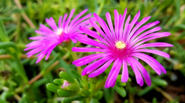 Purple-spindly-flowers