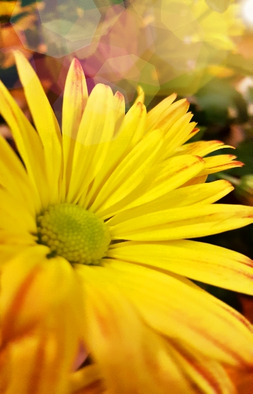 Beautiful-Yellow-Flower-Shining-Light