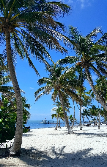 Beautiful-Beach-With-Palms