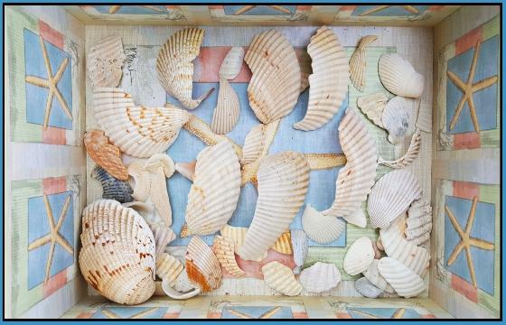 Box-of-raw-shells